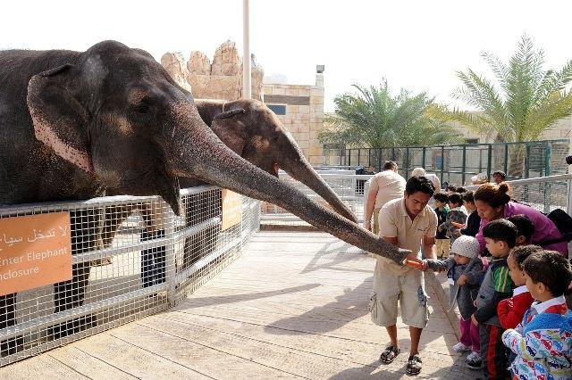 إطعام الفيلة