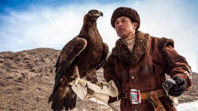 Photo of لا تفوتوا إختبار رياضة الصقور الملكية في كازاخستان