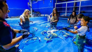 Photo of إنها فرصتكم لمشاهدة أسماك القرش عن قرب في دبي أكواريوم
