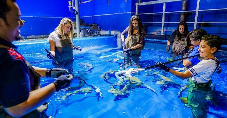 إنها فرصتكم لمشاهدة أسماك القرش عن قرب في دبي أكواريوم