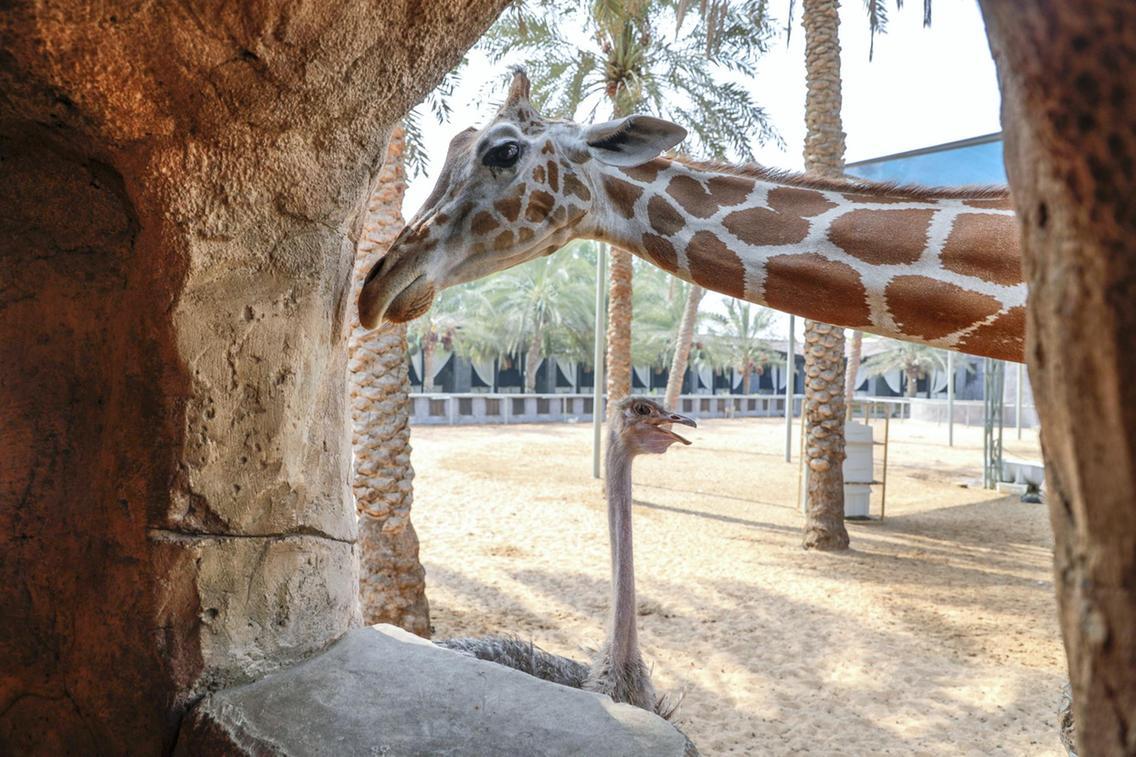 حديقة الإمارات للحيوانات في أبوظبي