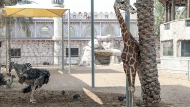 Photo of أغرب 5 أنشطة يمكنكم القيام بها في حديقة الحيوانات ابوظبي الامارات