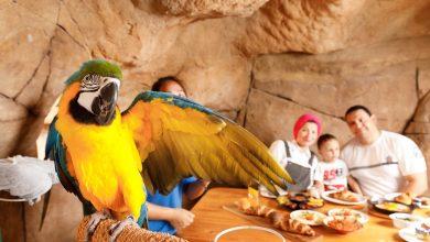 Photo of منتجع وحديقة الإمارات للحيوانات يقدم تجربة إفطار مع الطيور