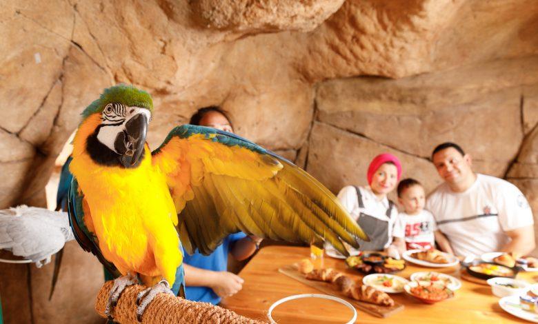 منتجع وحديقة الإمارات للحيوانات يقدم تجربة إفطار مع الطيور
