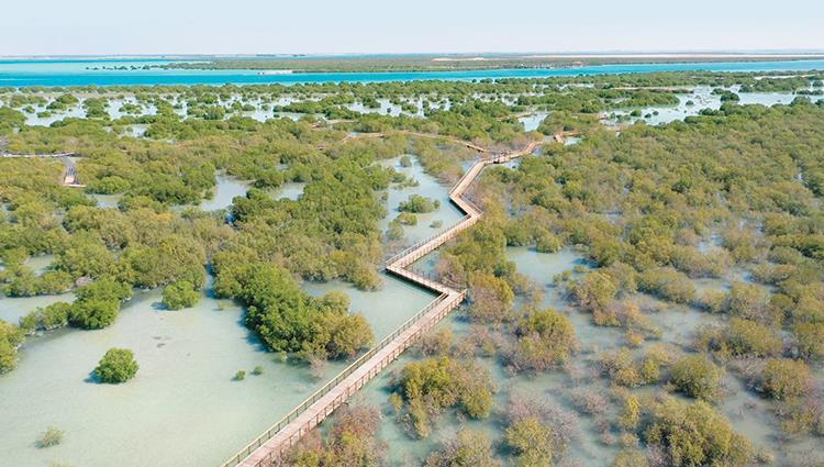 جزيرة الجبيل وجهة مميزة و فريدة لعشاق الطبيعة في أبوظبي