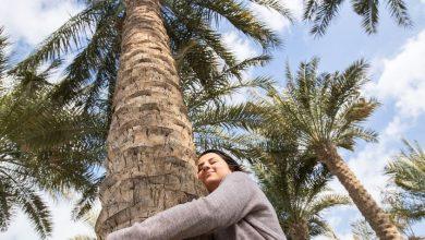 صورة متحف اللوفر أبوظبي يستضيف العمل التركيبي حين تُغنّي الأشجار
