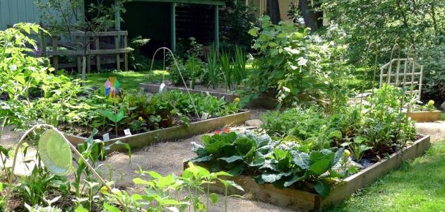 نصائح مهمة لإنشاء حديقتكم المنزلية