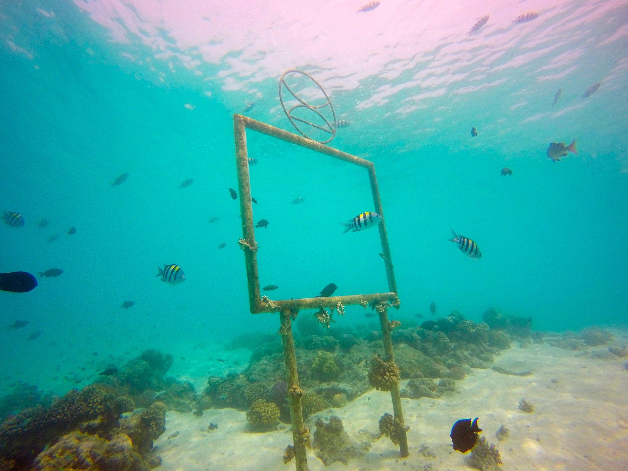 الشعاب المرجانية في المالديف