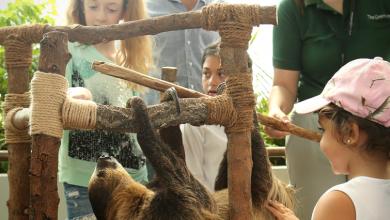 صورة ذا جرين بلانيت تنظم المخيم الصيفي الصديق للبيئة في دبي
