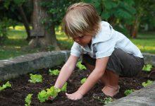 Photo of سيكس سنسيز تقدم لكم نصائح للمهتمين بالزراعة في المنزل