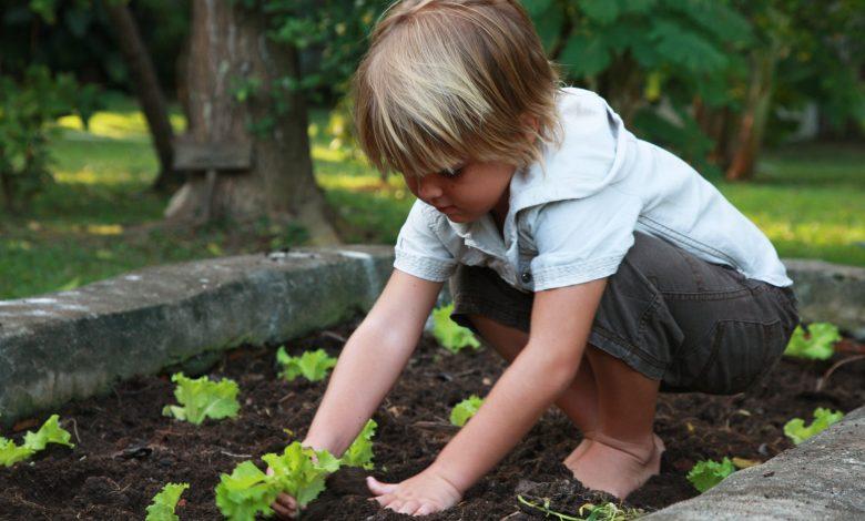 سيكس سنسيز تقدم لكم نصائح للمهتمين بالزراعة في المنزل