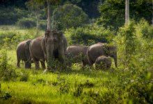 Photo of إطلاق مشروع حماية الفيلة في التايلاند