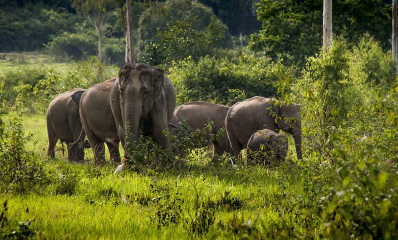 مشروع حماية الفيلة