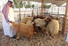 Photo of 9 مخالفات لا يجب على ممارسي مهنة الرعي القيام بها في الإمارات