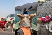 Photo of 5 أنشطة يمكنك الإستمتاع بها مع كلبك اللطيف في دبي