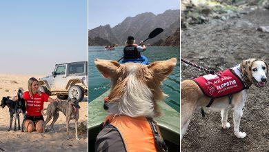 5 أنشطة يمكنك الإستمتاع بها مع كلبك اللطيف في دبي