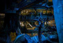 صورة ذا جرين بلانيت تطلق التجربة المشوقة ليلة في الغابات المطيرة