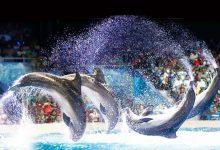 صورة دبي دولفيناريوم تنظم عروض الدلافين وحيونات الفقمة الممتعة