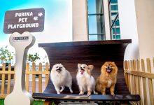 صورة إفتتاح ملعب للحيوانات الأليفة في ردهة مطعم جونيبرز