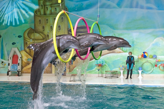 عروض الدلافين وحيونات الفقمة الممتعة